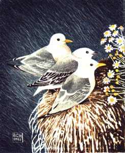 Kittiwakes. Watercolour
