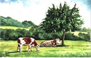 Lazy Afternoon, Normandy. Watercolour