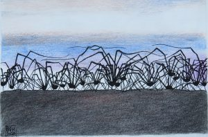 Harvestman Spiders (Coloured Pencil and Ink)