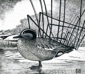Teal On A Frozen Pond (pen and ink on card)